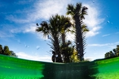 Salt Springs Palms